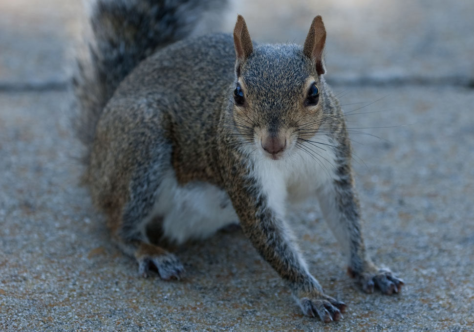 Squirrel_09_2019_2